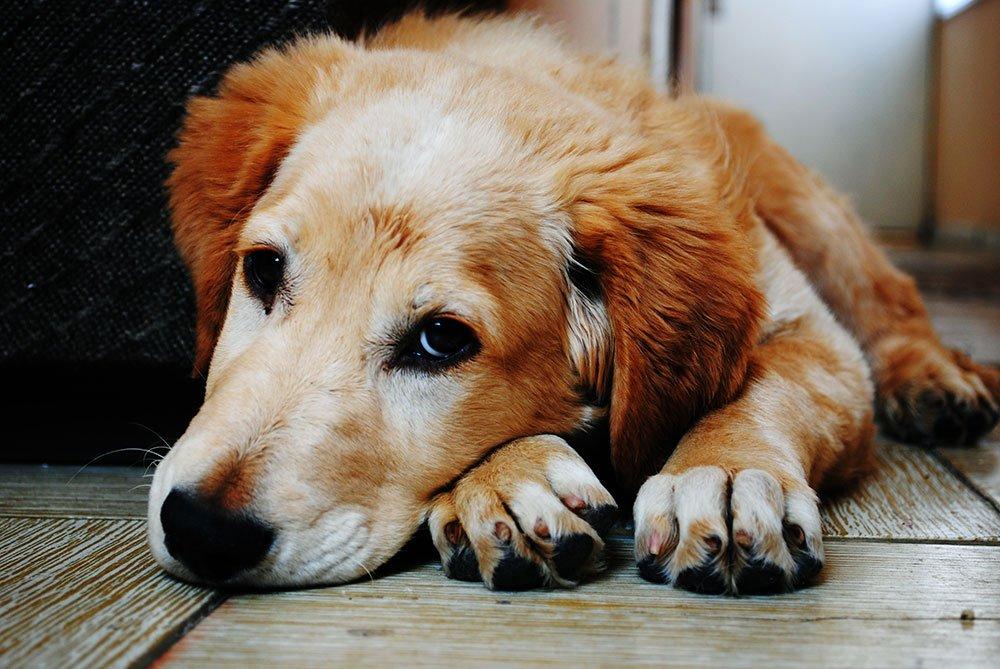 Veterinary Severna Park Mobile Vet Dog Vet Cat Medicine Md