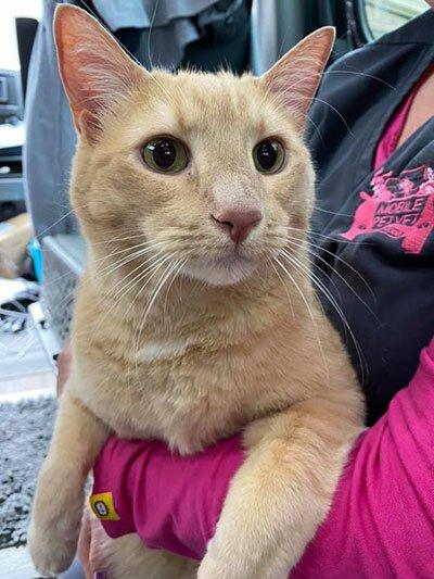 mobile vet holding ginger cat